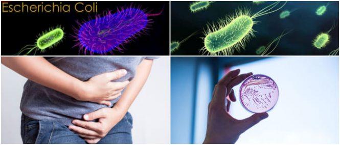 como se cura la escherichia coli