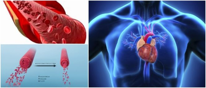vaso sanguíneo