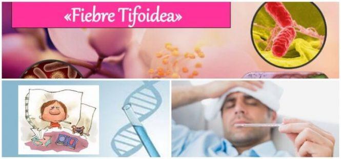 síntomas de la fiebre tifoidea