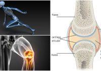 Anatomía de la diartrosis