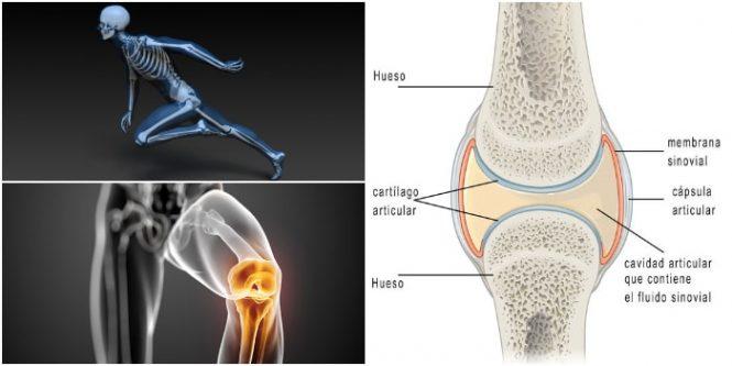 Diartrosis – Función Articular: Tipos y Ejemplos – Arriba Salud