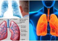 Anatomía del hilio pulmonar y sus afecciones