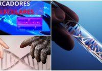 Aplicaciones y usos de los marcadores moleculares