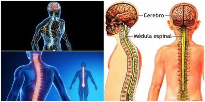 Síndromes Medulares: Tipos, Anatomía, Diagnóstico Diferencial y ...