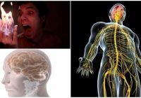 Función del sistema nervioso periferico y su anatomía