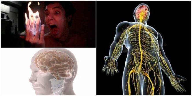 Anatomía del Sistema Nervioso Periférico: Funciones, Desarrollo ...