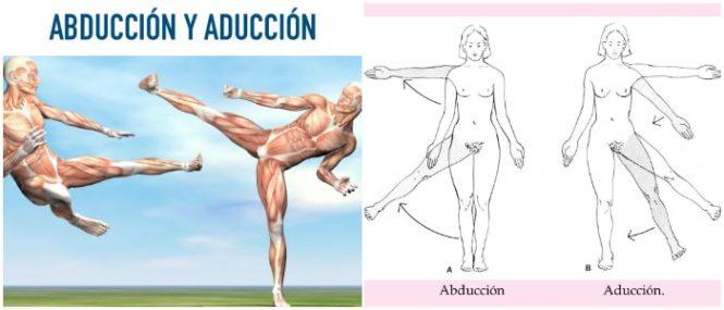Abduccion y Aduccion: Definición, Ejemplos, Diferencias y Otros ...