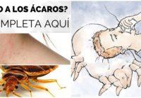 alergia a los acaros colchon