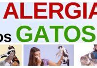 alergia a los gatos de repente