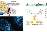 aminoglucosidos antibioticos