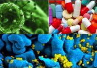 La penicilina y la cefalosporinas
