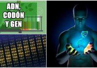 Definición biológica de codones en el codigo genético
