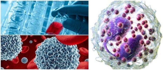 Función de los eosinofilos