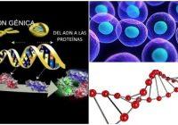 artículo sobre expresión génica