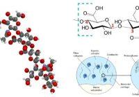 Definición y significado de los glicosaminoglicanos