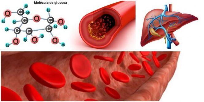 definición y bioquímica de la glucogenesis