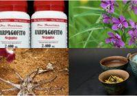 harpagofito botanical
