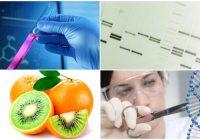 Definición de ingenieria genetica