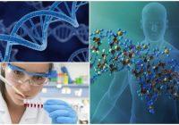 Definición de material genetico