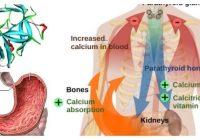 renina angiotensina aldosterona