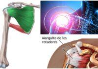 Anatomía del musculo subescapular