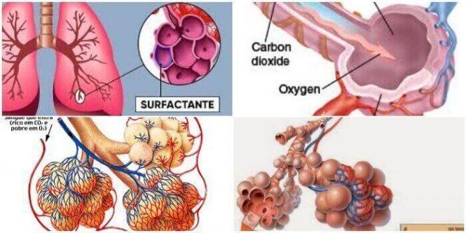 definición y función del surfactante pulmonar