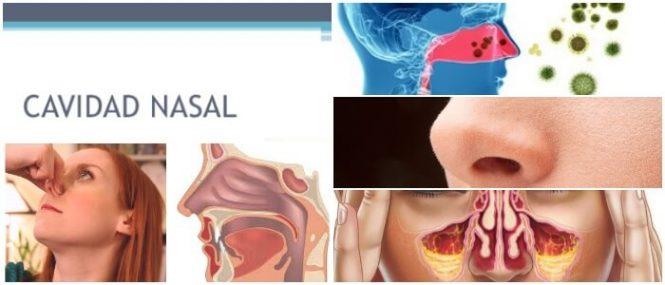 Cavidad Nasal: Anatomía, Fisiología, Estructura, Función y ...