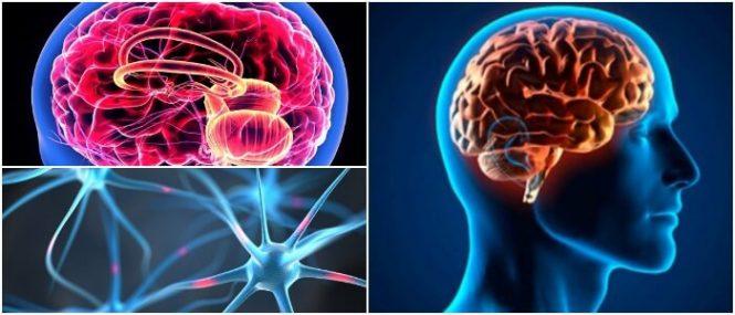 Encéfalo: ¿Qué Es? Importancia, Funciones y Anatomía – Arriba Salud