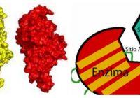 enzimas en general