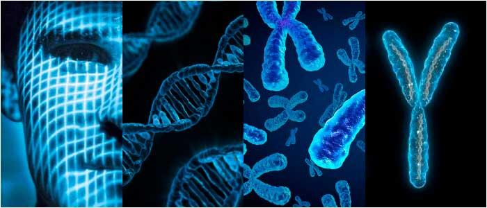 características de la genética humana
