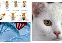 mutación del adn