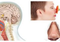 alteraciones del nervio olfatorio