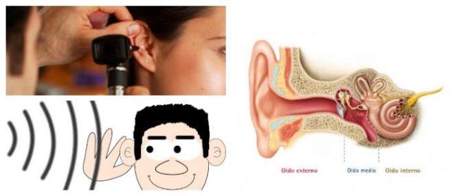 Nervio Vestibulococlear: ¿Qué Es? Curso Anatómico, Relevancia ...