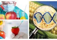 organismos transgenicos en plantas