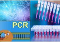 reaccion en cadena de la polimerasa articulo cientifico