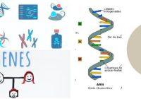 transcripcion arn a proteina