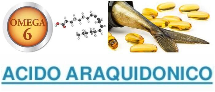 el ácido araquidonico en la bioquimica