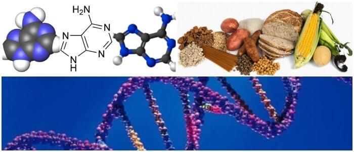 la adenina y el adn