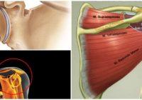 anatomía de la articulación del hombro
