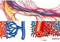 causas de capilares rotos