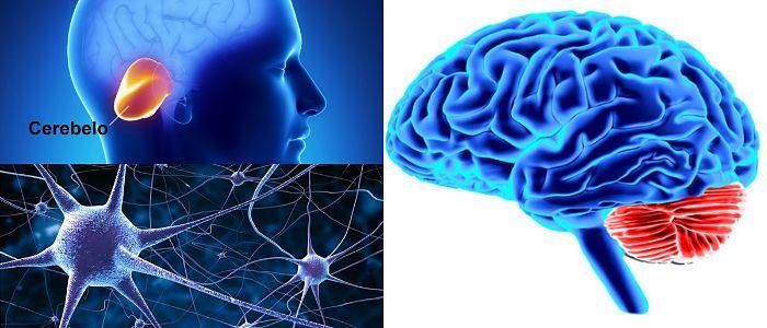 funciones del cerebelo