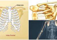 anatomía de la cintura escapular