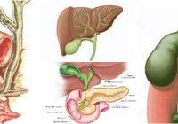 anatomia del conducto coledoco