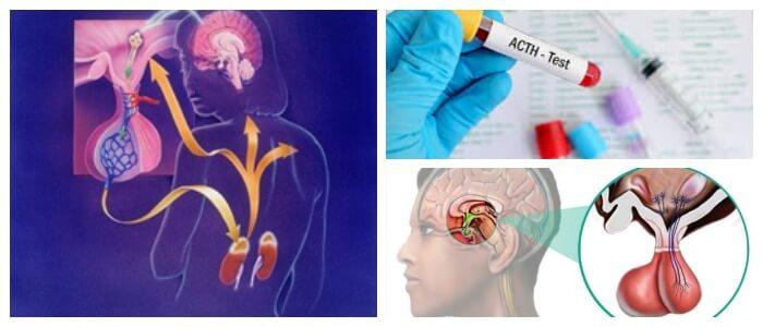 definición de corticotropina