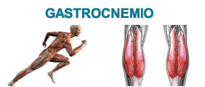 Gastrocnemio: Definición, Anatomía, Función, Acciones Posibles y ...
