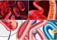 hemoglobina + que significa