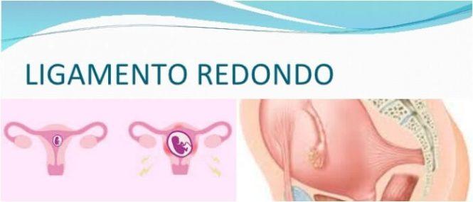 Ligamento Redondo: ¿Qué Es? Función, Embriología, Dolor Durante El ...