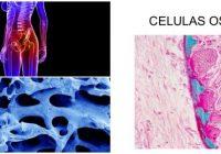 que son las células oseas y su funcion