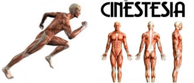 la cinestesia en educación física