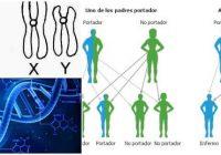 cuales son los cromosomas autosomicos dominantes